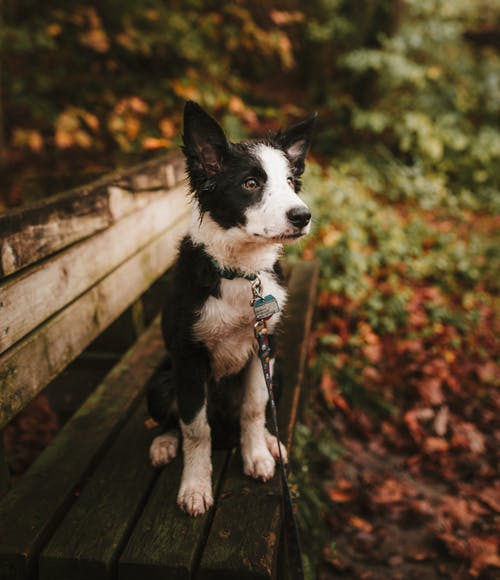 Factors to Consider Before Taking Care of a Pet
