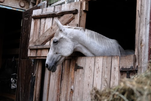 Essential Things Needed in a Horse Stall