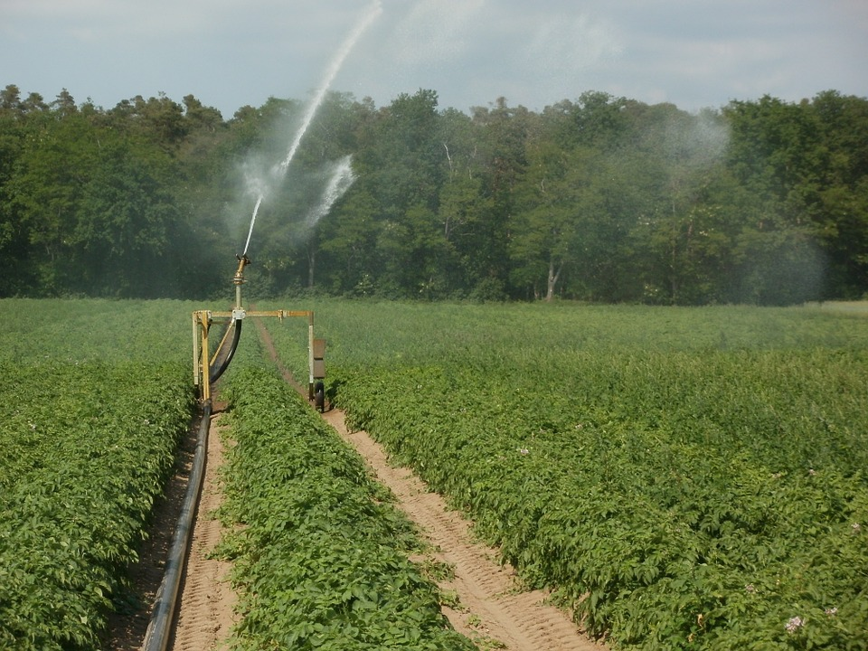 Important Steps in Growing Better Crops